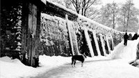 A dog stands next to a snowy canal