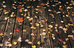 Decking and Leaves. How To Clean A Garden Deck