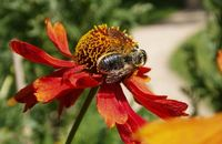 BEE-WILDLIFE-IN-GARDEN