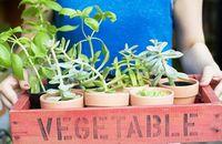 vegetables-plant-pots-garden-lg