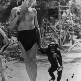 Tarzan's chimpanzee' Cheetah dies – Channel 4 News