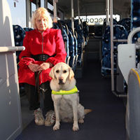 Blind bus users left in 'dangerous situations'
