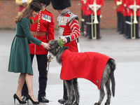 Catherine, Duchess of Cambridge presents a 'shamrock' to the Regimental mascot as she takes part in a St Patrick's Day parade as she visits Aldershot Barracks on St Patrick's Day on March 17 (Getty).