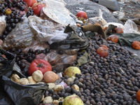 Fruit lies rotting in the bombed-out district of Midan, Damascus.