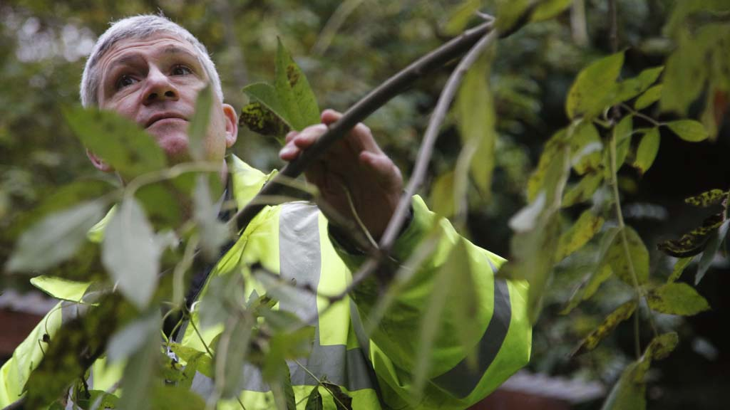 Confirmed cases of the deadly tree disease ash dieback are now so widespread they are beyond containment, experts warn (Reuters)