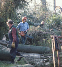 The clean-up operation after the Great Storm (Wakehurst Place)
