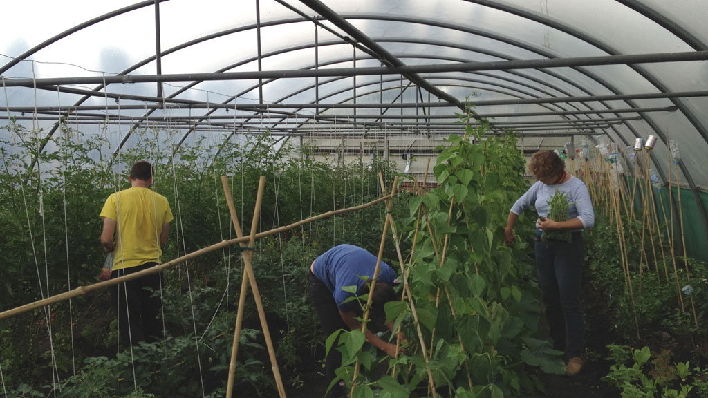 Apprentices in polytunnel