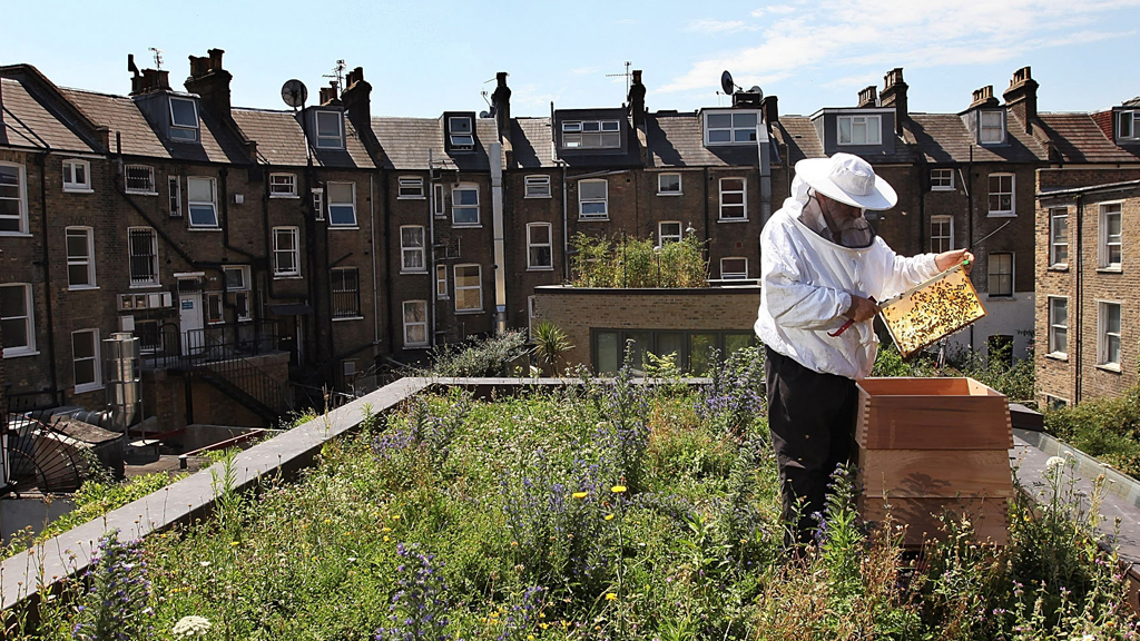 Severe declines in beekeeping have been previously reported, but have reversed in recent years, partly due to an increase in urban beekeeping (picture: Getty)