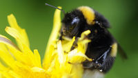 Bee colony losses accelerating (Reuters)
