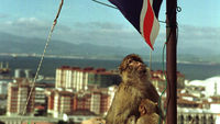 A monkey on the Rock of Gibraltar (Reuters)