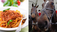 Ban on cheap meat blamed for horsemeat scandal (R)