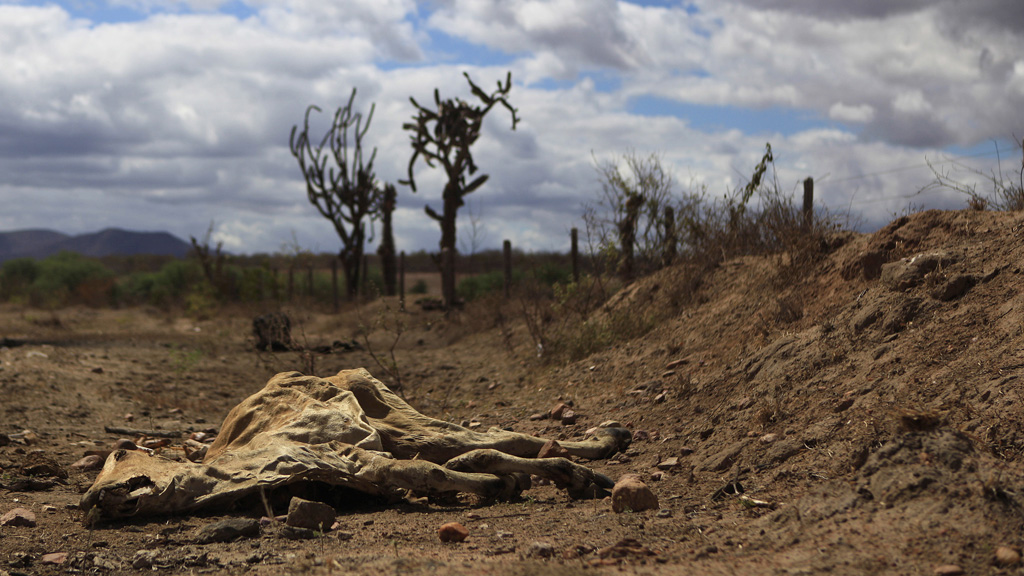 A cattle which has died in extreme drought conditions in Brazil (Reuters)