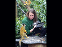 London Zoo stock-take: squirrel monkey (image courtesy London Zoo).