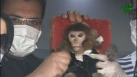 Iran 'sends monkey to space'