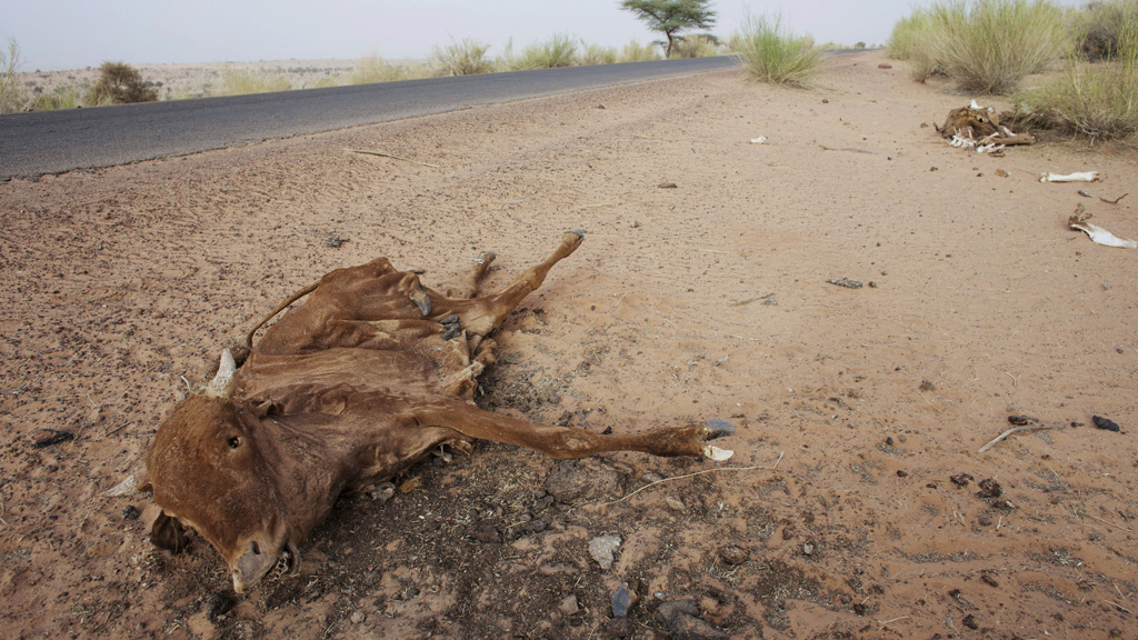 Pastoral communities face losing their livelihood (picture: Reuters)