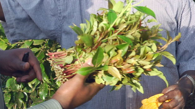 Joining the police crack-down on banned drug khat – Channel