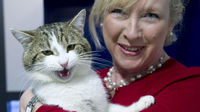 Cameron 'appoints' cat as Downing Street ratter (Reuters)