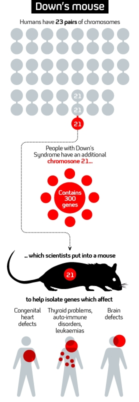 Graphic showing how mice are being used to isolate genes linked to a variety of medical conditions
