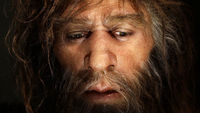Scientists believe Neanderthal man was wiped out in a wave of mass migration out of Africa - by homo sapiens (Reuters)