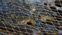 Government attack EU dead fish rules - Reuters