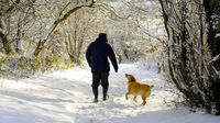 A man walks a dog in UK snow