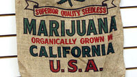 California considers legalising cannabis