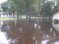 flooding at pine forest